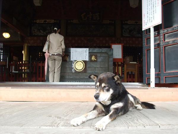 布施弁天の犬