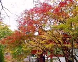 談山神社紅葉