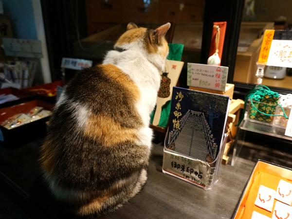 愛宕神社の猫さん