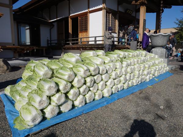 天明寺の白菜