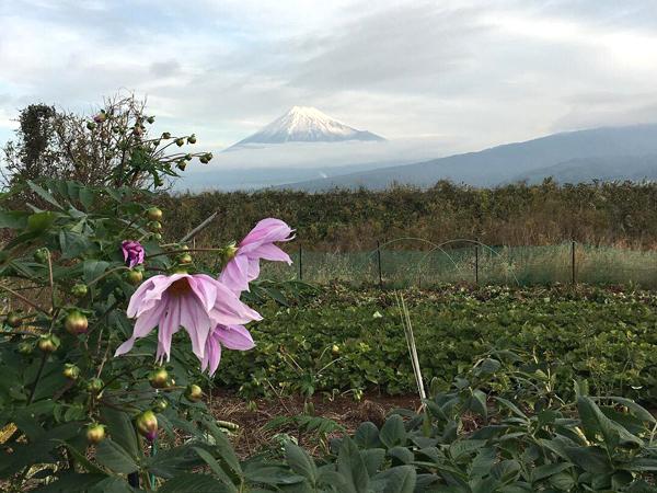 小野常寛さんが見た富士山と花
